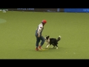 Heelwork to Music - Freestyle International Competition Part 2 Crufts 2018