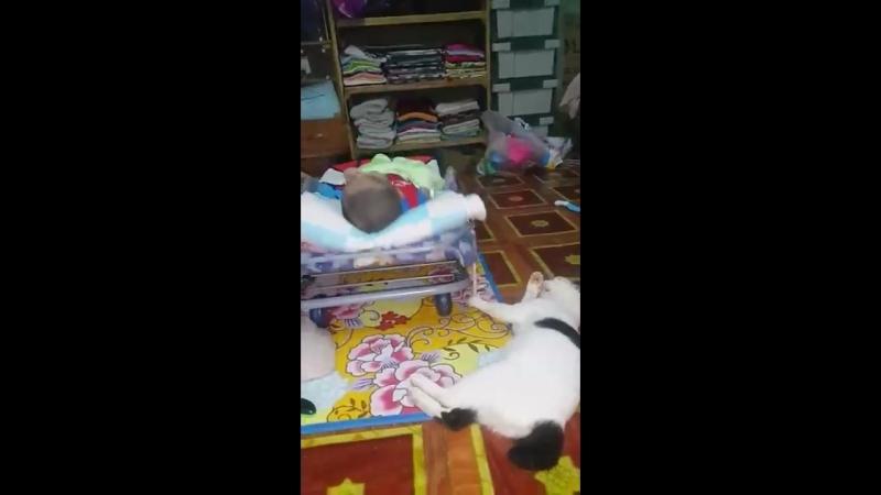 Кот помощник (VIDEO ВАРЕНЬЕ)