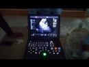 Dawei DW VET8 DW C60 exam dog fetal heart with BM model