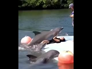 Хулиганистые дельфины Армении (Колумбия)