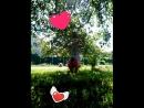 Video_2018_08_15_14_50_10.mp4