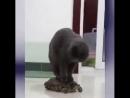 Покатай меня, большая черепаха:)