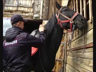 Цирк с конями или почетная и редкая служба?