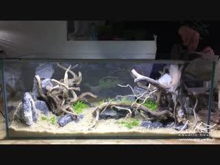 Aquarium aquascaping double face - Rhino VS Octopus by Laurent Garcia