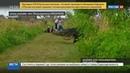 Новости на Россия 24 • Во Флориде на глаза людям показался гигантский аллигатор-пешеход