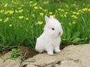 Los bebes conejitos lo más tiernos del mundo