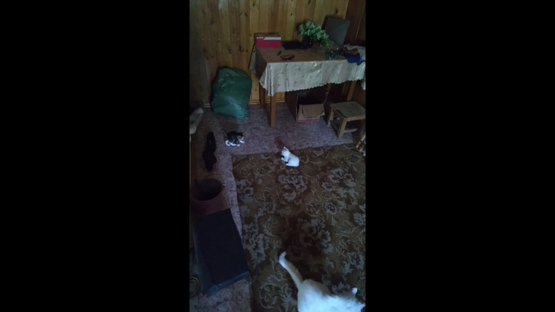 2 мелких и кошка.