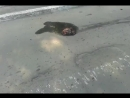 БТР Д ВСУ уничтоженный в Шахтерске прямым попаданием снаряда танка ДНР