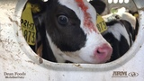 Mothers in the Dairy Industry - Animal Recovery Mission