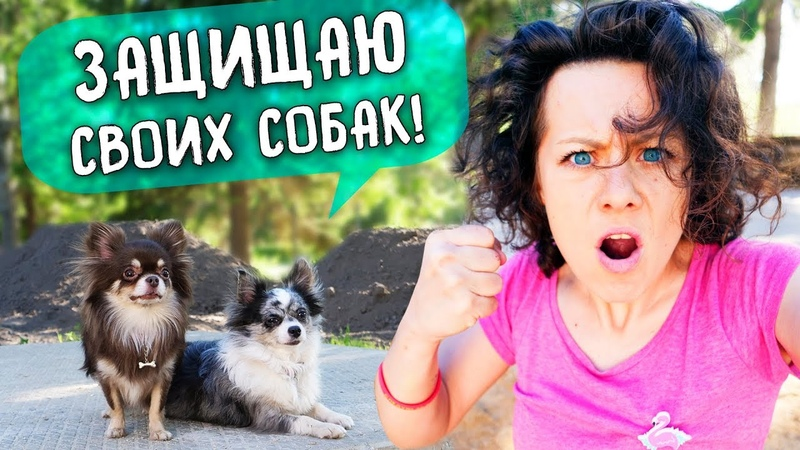 ОБЗЫВАЮТ СОБАК и ТРАВЯТ МИША ПОТЕРЯЛАСЬ РЕАКЦИЯ на БЕЗДОМНОГО ПСА ВЛОГ Magic Family