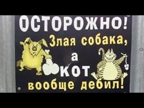 Лютые объявления Мегаподборка с канала Макс Максимов Осторожно злая собака а кот вообще ДЕБИЛ