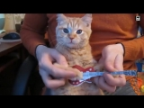 Thrash &amp Heavy metal CATS