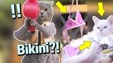 Aaron's Animals NEW VIDEO COMPILATION