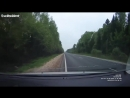 Сбил лося ДТП, car accident with moose in Russia