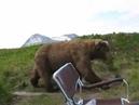 Медведь на рыбалке. Канада.