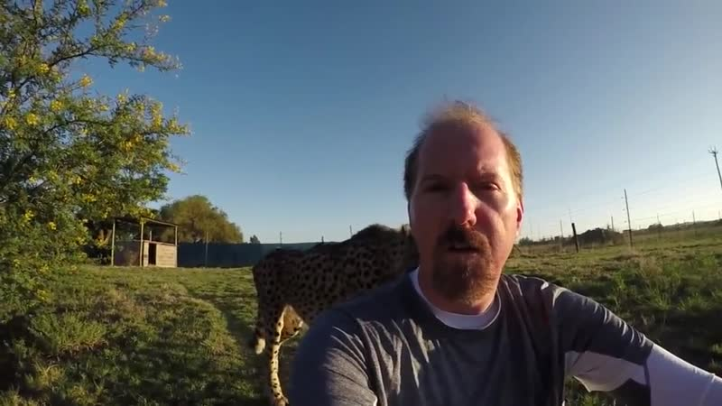Turning your back on a cheetah