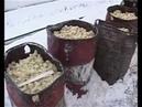 Работники выбрасывают живых цыплят на мороз Ужас