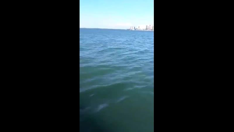 Рыбак пустился в погоню за уплывающим уловом