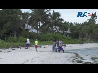 Красный прилив, убивающий рыбу, захватывает всё новые районы Флориды