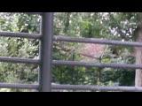 Московский зоопарк - бегемотик Ксюша