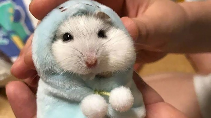 [40 MIN] Ultimate Funny Hamsters Videos Compilation | Cute And Funniest Hamster