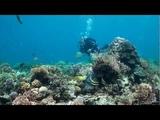 SCUBA Diving Malapascua, Mactan, Oslob - Cebu, The Philipines - Underwater Video HD