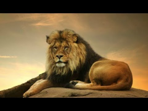 TENCA – Лев ✔️