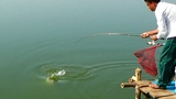 Amazing Rohu Fishing Videos By Owner Of Dalas Pond