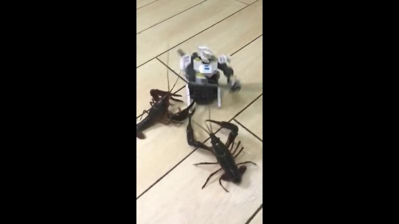 робот бьется с раками