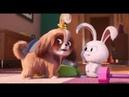 Тайная жизнь домашних животных 2 Тизер-трейлер 2 КиноПарк