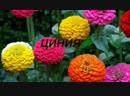 Цветы в саду которые можно не поливать Дачники