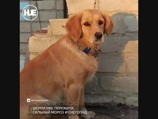 В Воронежской области собака дежурит у дверей больницы, где лежит хозяин