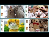 Name and sound of agricultural and Natural animal Kids Learning