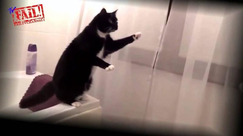 Лучшие Приколы с Кошками Лучшие ролики 2014 Best Funny with cats The best videos 2014