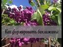 Как избавиться от почвенных вредителей Дачные сезоны 26 мая 2018