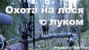 Охота на лося с луком на реву онлайн 2012-2013