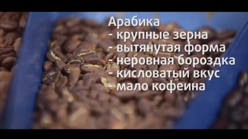 Как выбрать кофе Арабика и Робуста. Советы от Моя Кофейня и JS Barista Training