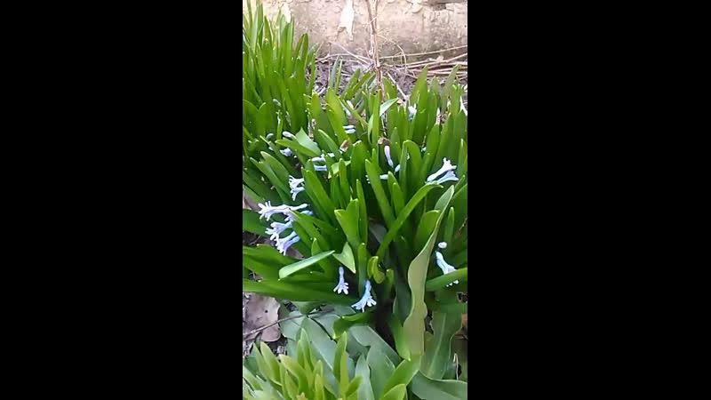 Весны в ленту немного! Цветочки зацвели во дворе!