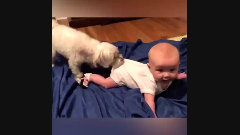 собака найкращий друг дитини