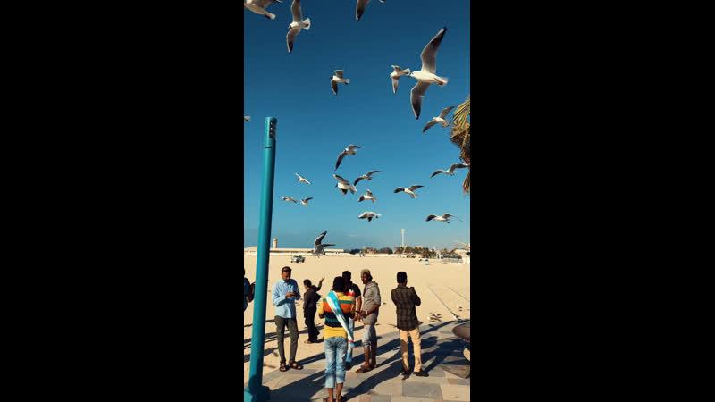 Дубаи'ские чайки 🦅🦅🦅
