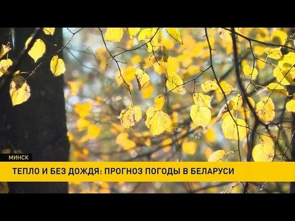Тепло и без дождя будет на этой неделе в Беларуси