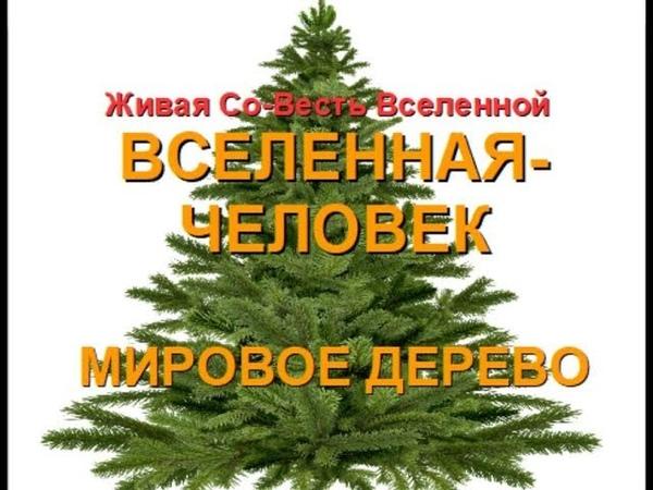 МИРОВОЕ ДЕРЕВО - ВСЕЛЕНСКИЙ ЧЕЛОВЕК (Александра Барвицкая-Женьшеневая Женщина)