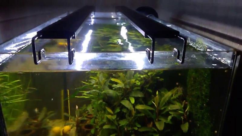 Мой аквариум с Буцефаландрами Добавляю Железо Калий