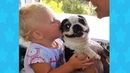 Boston terrier dog makes Baby belly laugh cute ever Dog loves Baby Videos