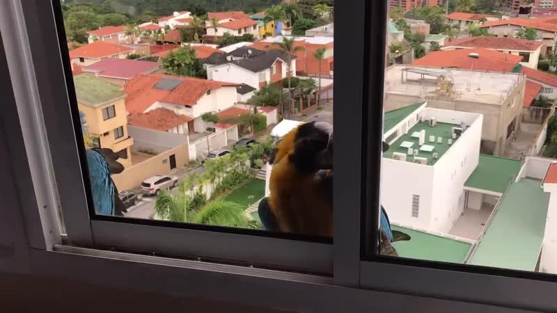 ... «А вы не ждали нас, а мы припёрлися»... в Каракасе..