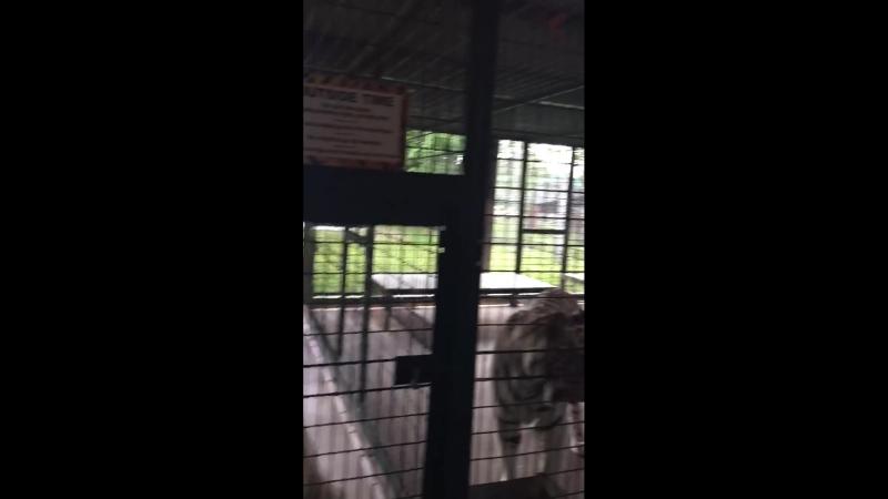 Babakuli Annakov с Marina Annakova находятся в Big Cat Habitat and Gulf Coast Sanctuary. 8 августа в 21:06 · Город Сарасота, Сое