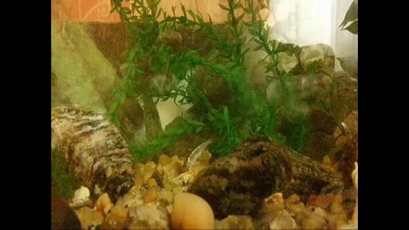 Мой аквариум 2018. Речная рыбка Верхоплавка!