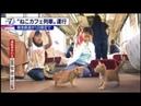 【猫カフェ列車】岐阜養老鉄道の「ねこカフェ列車」で子猫と触れ合う乗客 2017.09.10