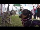 Котенок Джульбарс - переодетая собака