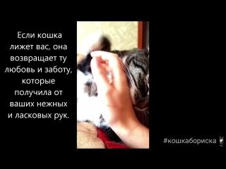#кошкабориска Почемку кошка лижет руки